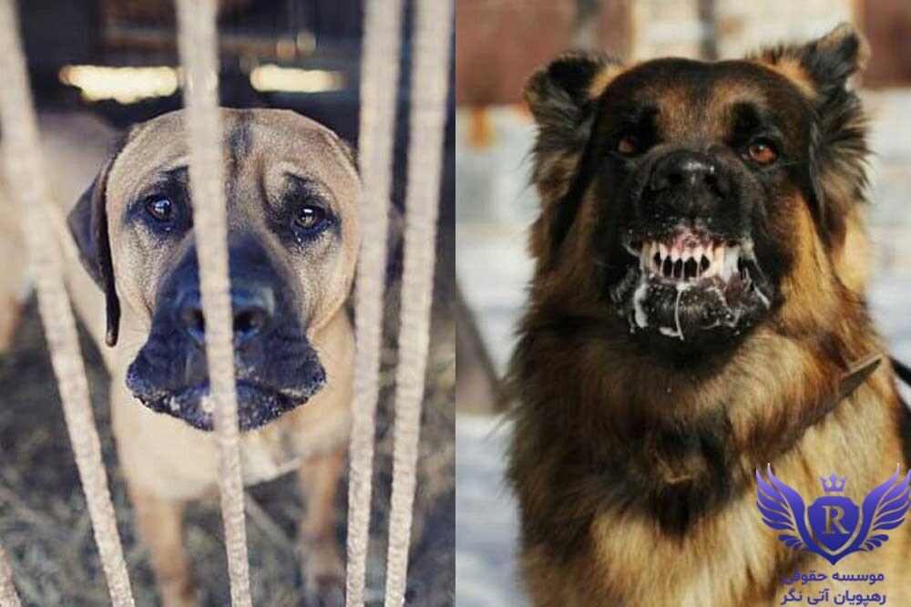صدمات وارده توسط حیوانات برعلیه اشخاص